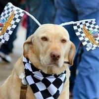 A Dog at the Parade