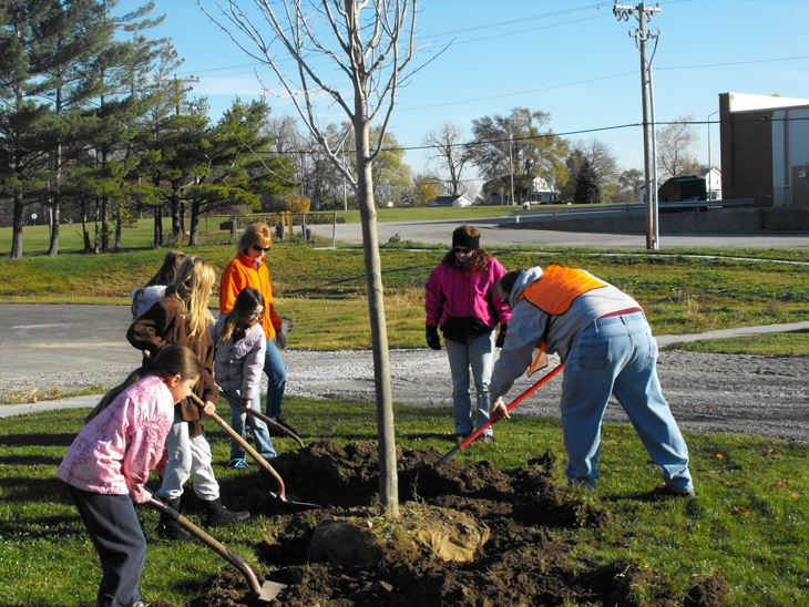 Citizens work to plant trees